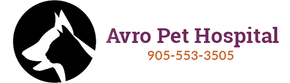 Logo for Veterinarians in Vaughan | Avro Pet Hospital